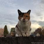 【文京区】駐車場のサビ猫さんと塀の上の三毛猫さん