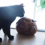 猫型の陶器の湯たんぽをチェックする黒猫