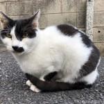 【葛飾】サイクリング中に見かけた白黒猫さん