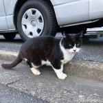 【文京区】舌を出していたオトコマエな黒白猫さん