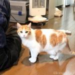 石油ファンヒーターの修理を見守る猫