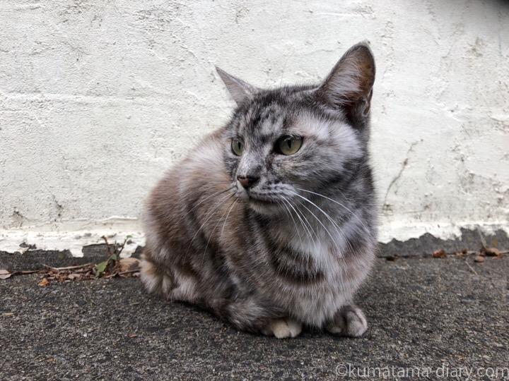 松戸市の猫さん