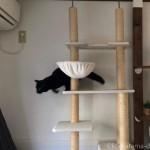 修理のおじさんにびっくりして逃げた黒猫