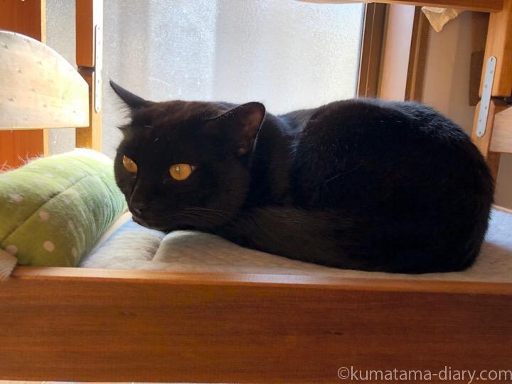 IKEA猫ベッド下段ふみお