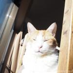 家の中で1番あたたかい場所を知っている猫