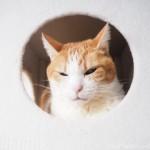 キャットタワーのボックスから追い出された猫