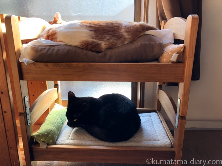 IKEA猫ベッドで寝る2匹