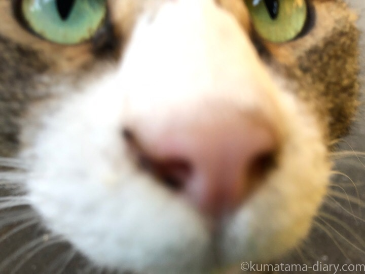 キジトラ白猫さん
