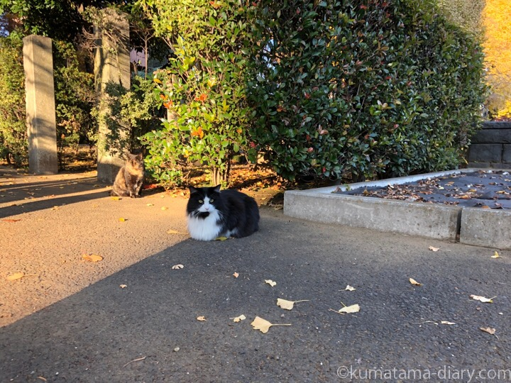 長毛黒白猫さん
