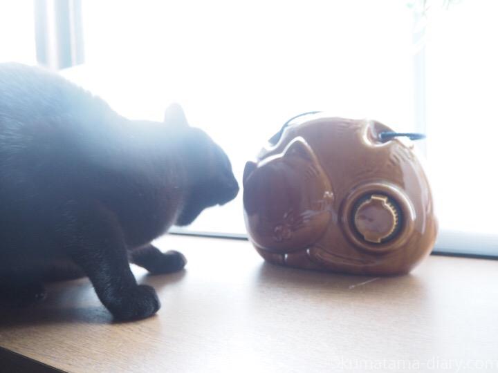 猫型陶器湯たんぽをにおうふみお