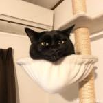 ハンモックにあごのせする猫