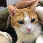猫のために布団を温める仕事