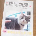 『月刊猫とも新聞』2020年1月号の特集は「あなたにピッタリ猫」です