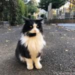 【文京区】吉祥寺の長毛の黒白猫さん