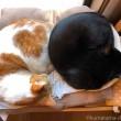 IKEA猫ベッドのたまきとふみお
