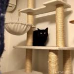 「Avaros LEDシーリングライト」の取付をキャットタワーから見ていた猫