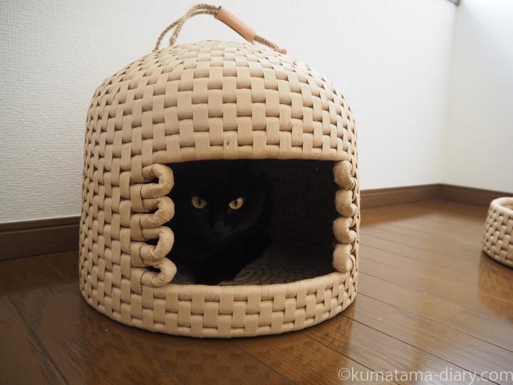 猫ちぐらに入るふみお