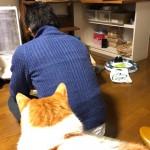 「猫専用猫のごはん保存BOX」に金具を付ける作業を見守る猫