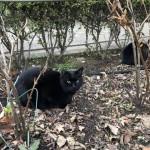 新年を迎えた「白山神社」の猫さんたち