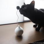 「pidan 電動猫おもちゃボール」をチェックする猫たち