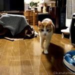 エサを待つ間「ペットの夢こたつ」の周りを歩き回る猫【動画】