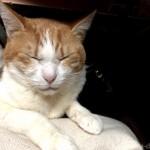 「ペットの夢こたつ」の中の湯たんぽに乗る猫