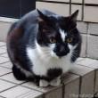 個性的な柄の黒白猫さん
