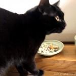 手作りごはんを食べる猫たち
