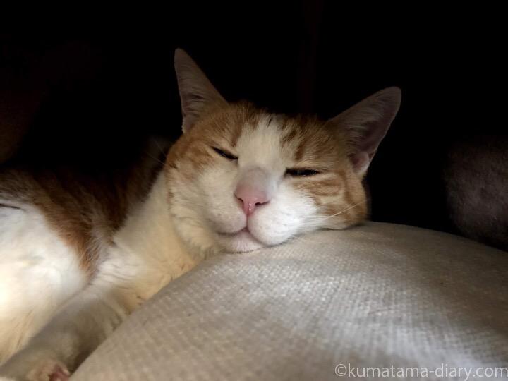 湯たんぽの上で寝るたまき