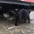 駐車場の黒猫さんと三毛猫さん