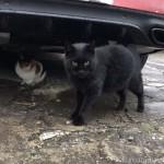 【文京区】三毛猫さんを守るように立っていた黒猫さん