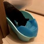 トイレを見られるのは平気な猫