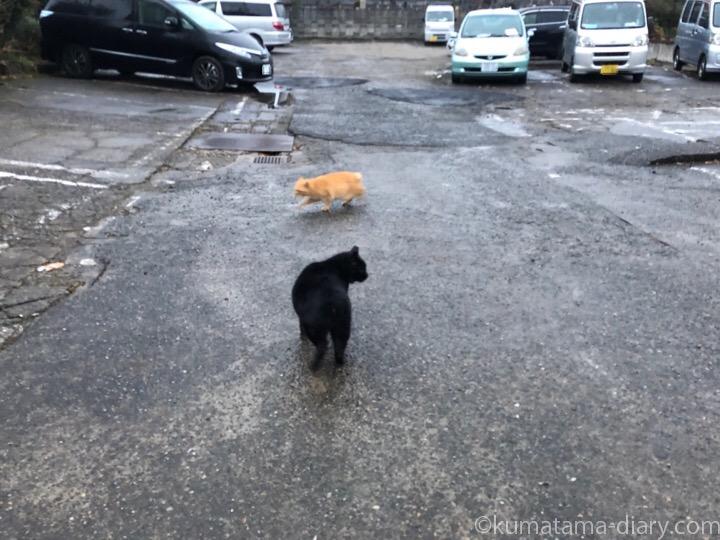 駐車場の茶トラ猫さんと黒猫さん