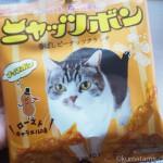 猫がデザインされたナッツボンの限定バージョン「ニャッツボン」
