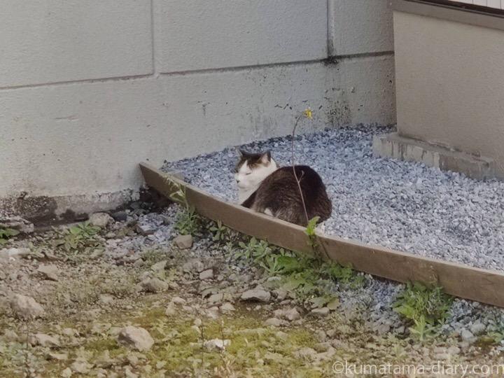 売り物件の猫さん