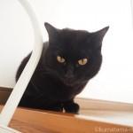 猫のヒゲを桐製の「猫専用猫のひげケース」に入れて集めています