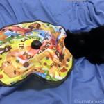 手動の猫おもちゃ「猫壱 キャッチ・ミー・イフ・ユー・キャン2」で遊ぶ猫