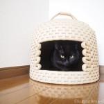 ロフトの隅に置いた「猫ちぐら」でくつろぐ猫