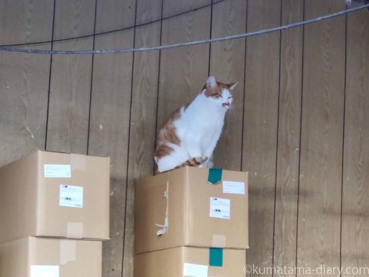 亀戸の看板猫さん