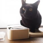 菓子工房ルスルスの「ミカモトわっぱ」のふたが気に入った猫
