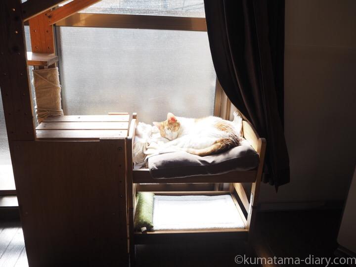 IKEA猫ベッドたまき