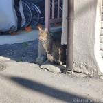 【文京区】久しぶりに見かけたキジトラ猫さん