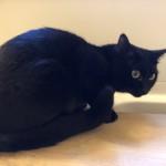 【月命日】ヒノキの風呂フタに乗る猫
