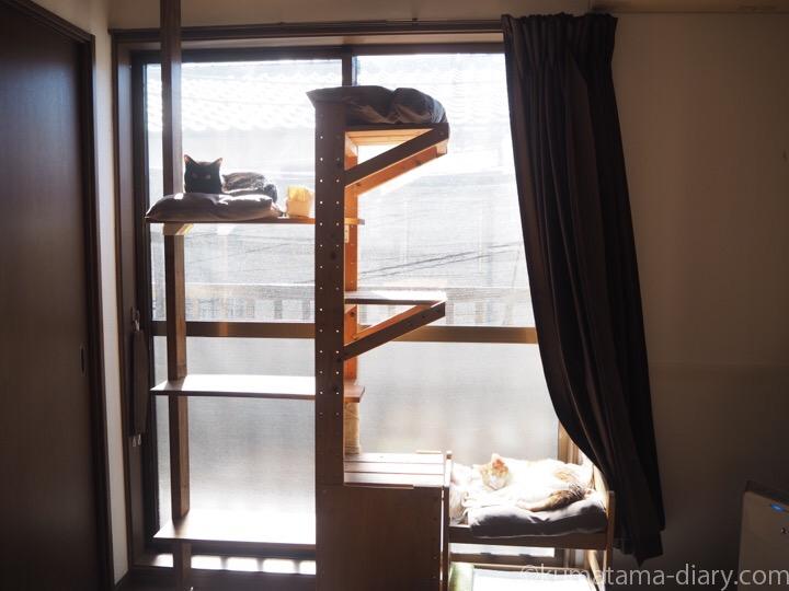 2階キャットタワーたまきふみお