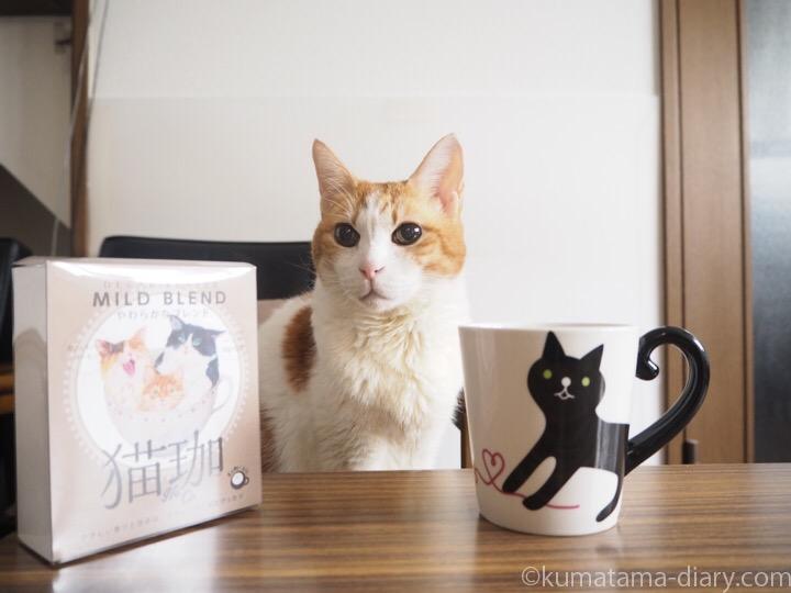 たまきと猫珈