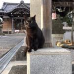 【文京区】小石川の凛々しい黒猫さん