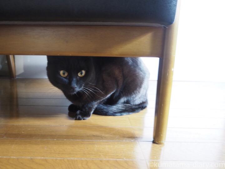 ソファーの下のふみお