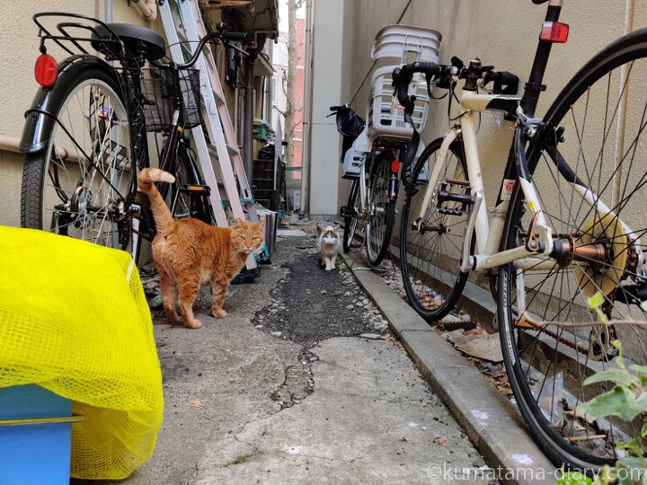 茶トラ猫さんとキジトラ白猫さん