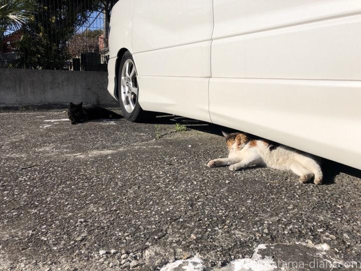 車の下の三毛猫さんと黒猫さん