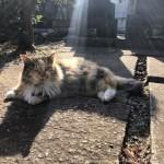 【文京区】虹色の光に包まれる吉祥寺の三毛猫さん